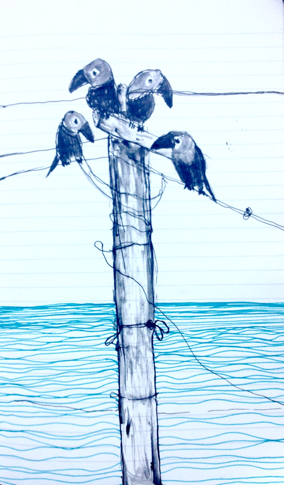 Corvi. In india, black and blue pen on paper.