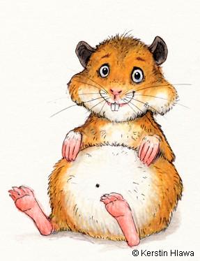 Hamster, Buntstift/Tusche, 2009