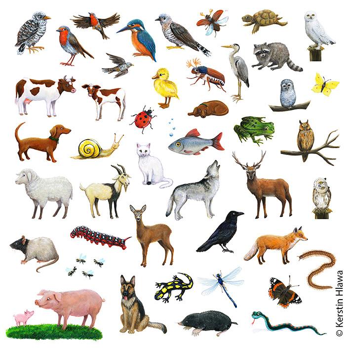 Tiervignetten für Schubi- Verlag, Acryl
