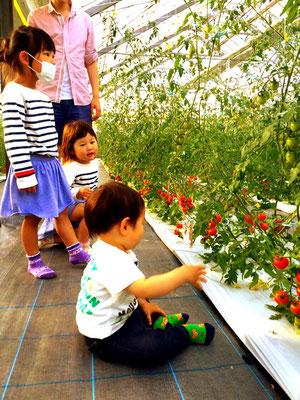 子供たちにも大人気の収穫体験