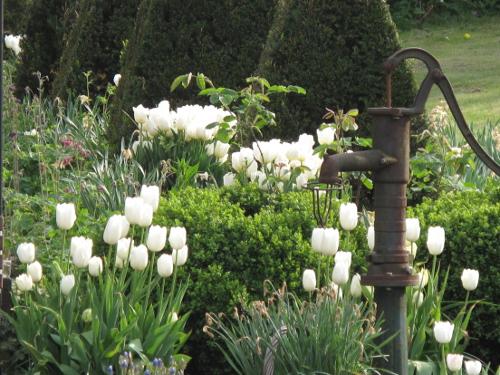 Zwiebeln für den weißen Garten: