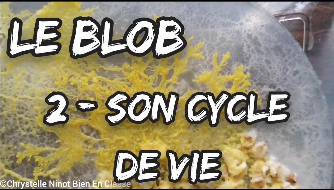 Le Blob - Nouvelle vidéo!
