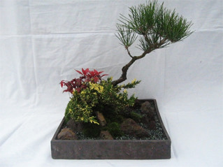 景色盆栽2
