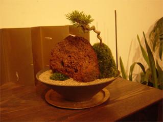 景色盆栽1