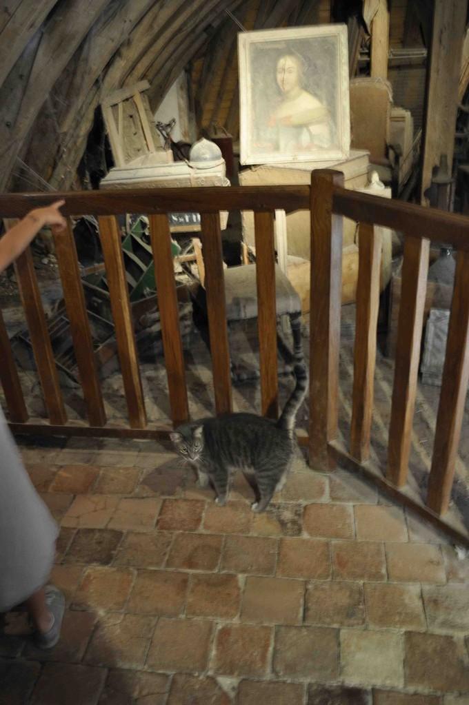 展示のお部屋との間に、屋根裏部屋をイメージしたちょっと怖い通路。住人は野良猫。