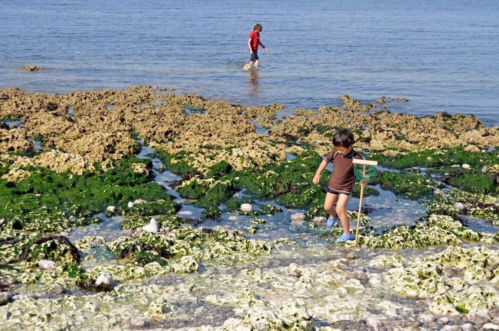 「海の底の散歩、楽しかった〜」by5歳児。