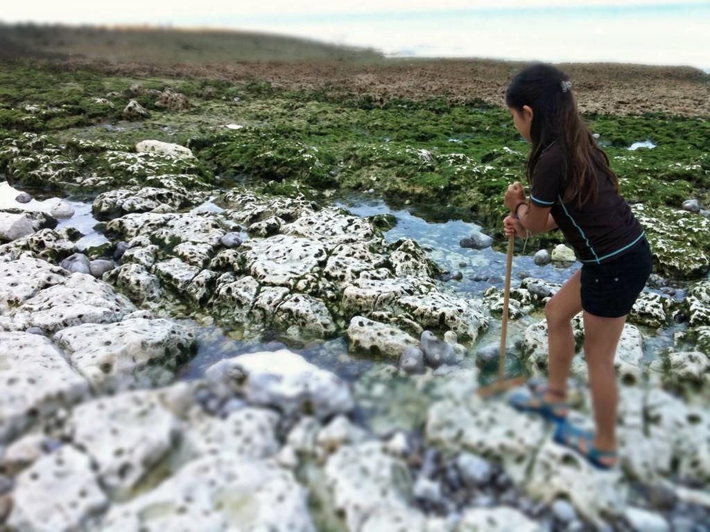 三日目にしてどこの岩の水たまりに生物が多くいるかを習得した8歳児。