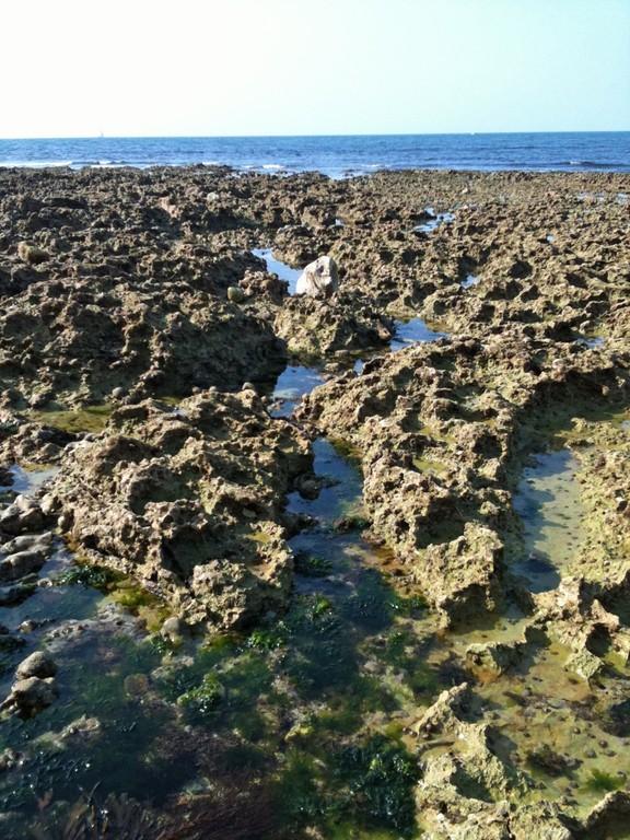 引き潮の時に現れる、尖った岩の海底。