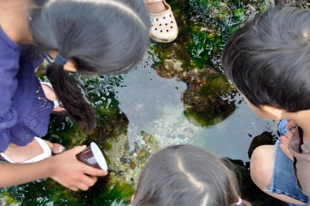 グレーの海老と呼ばれる小さな海老も発見!