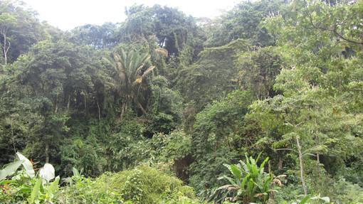 La végétation du Panama