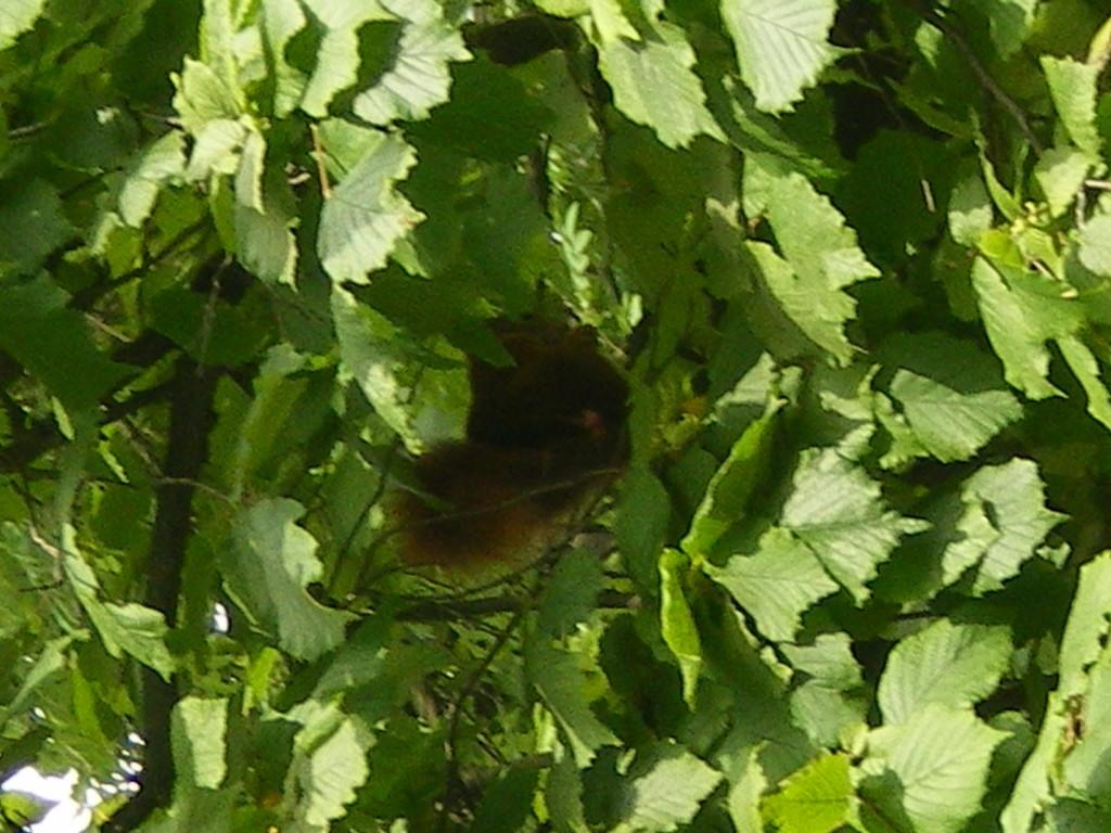 ein kleines Eichhörnchen