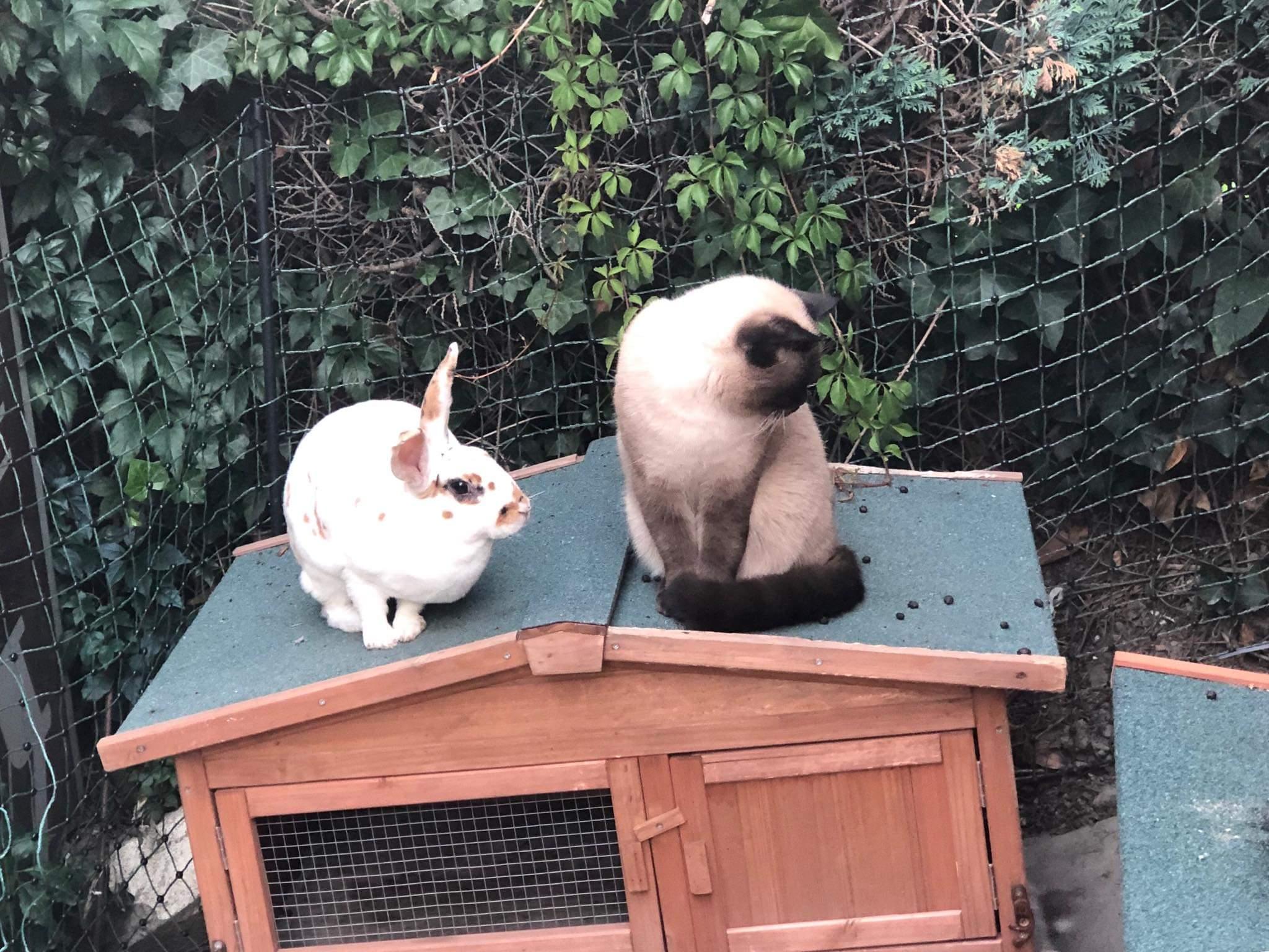 Hektor und Lady Biscuit vom Kaninchen - Clan. Kaninchen und Katzen können sich durchaus vertragen