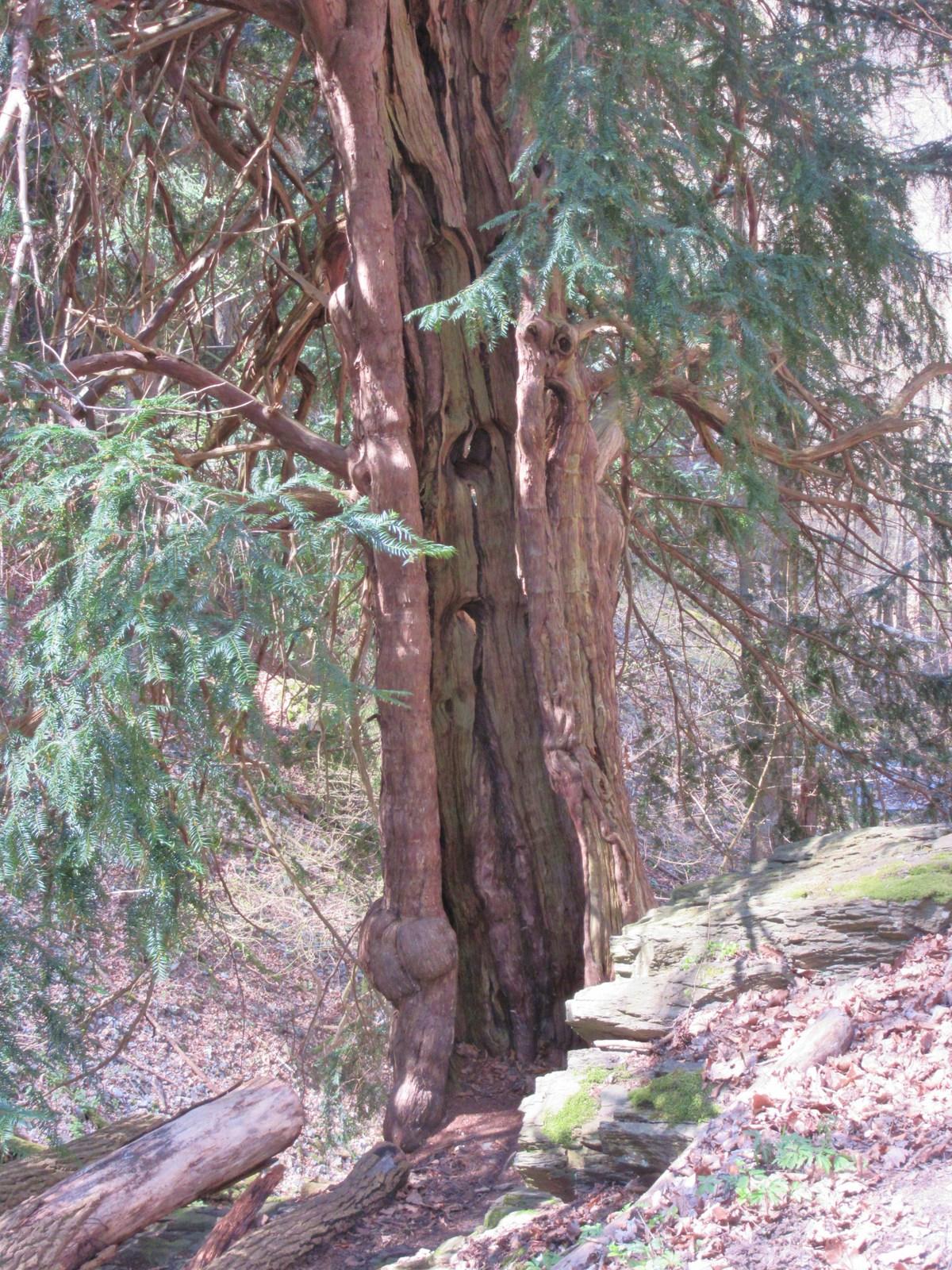 Am alte Holz wächst das junge weiter!