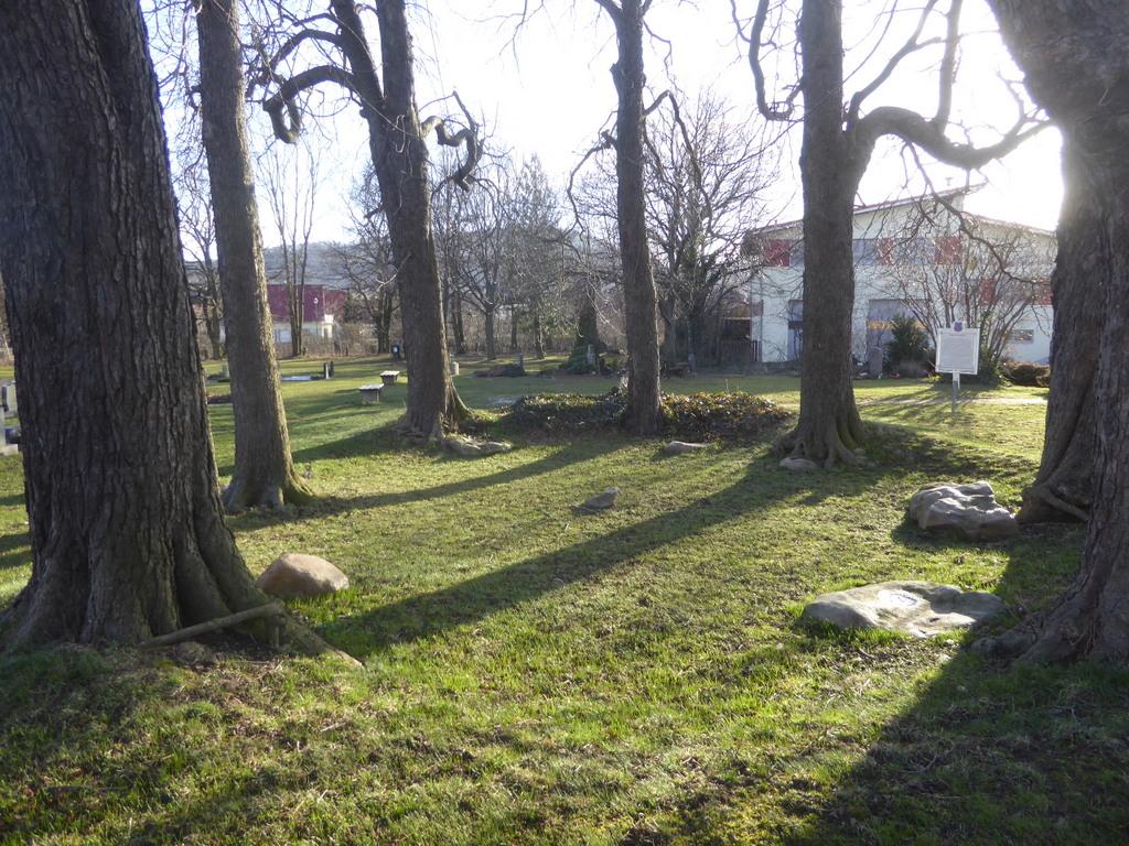 Der Steinkreis mit seinen Bäumen