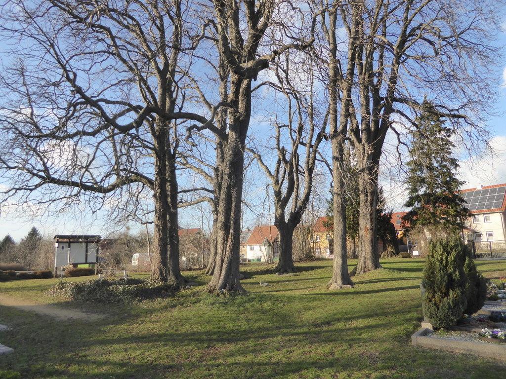 Die Ansicht des Steinkreises mit den Bäumen