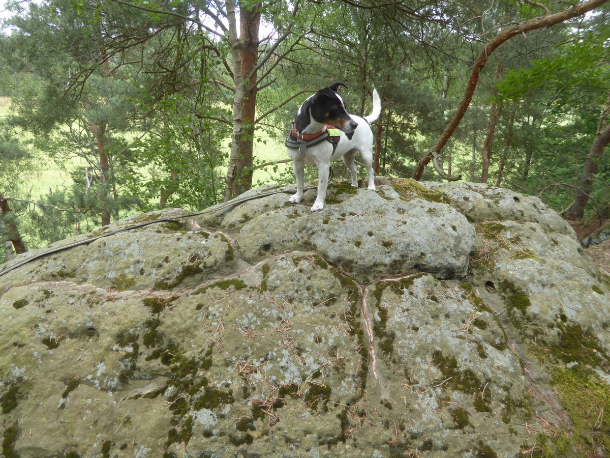 Die Ritzzeichnung und unser Hund