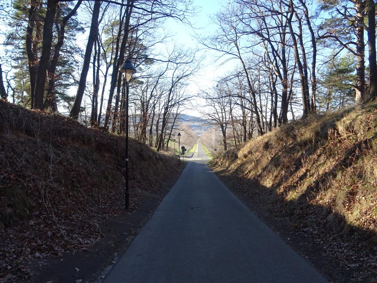Die Auffahrtstraße z. Regenstein