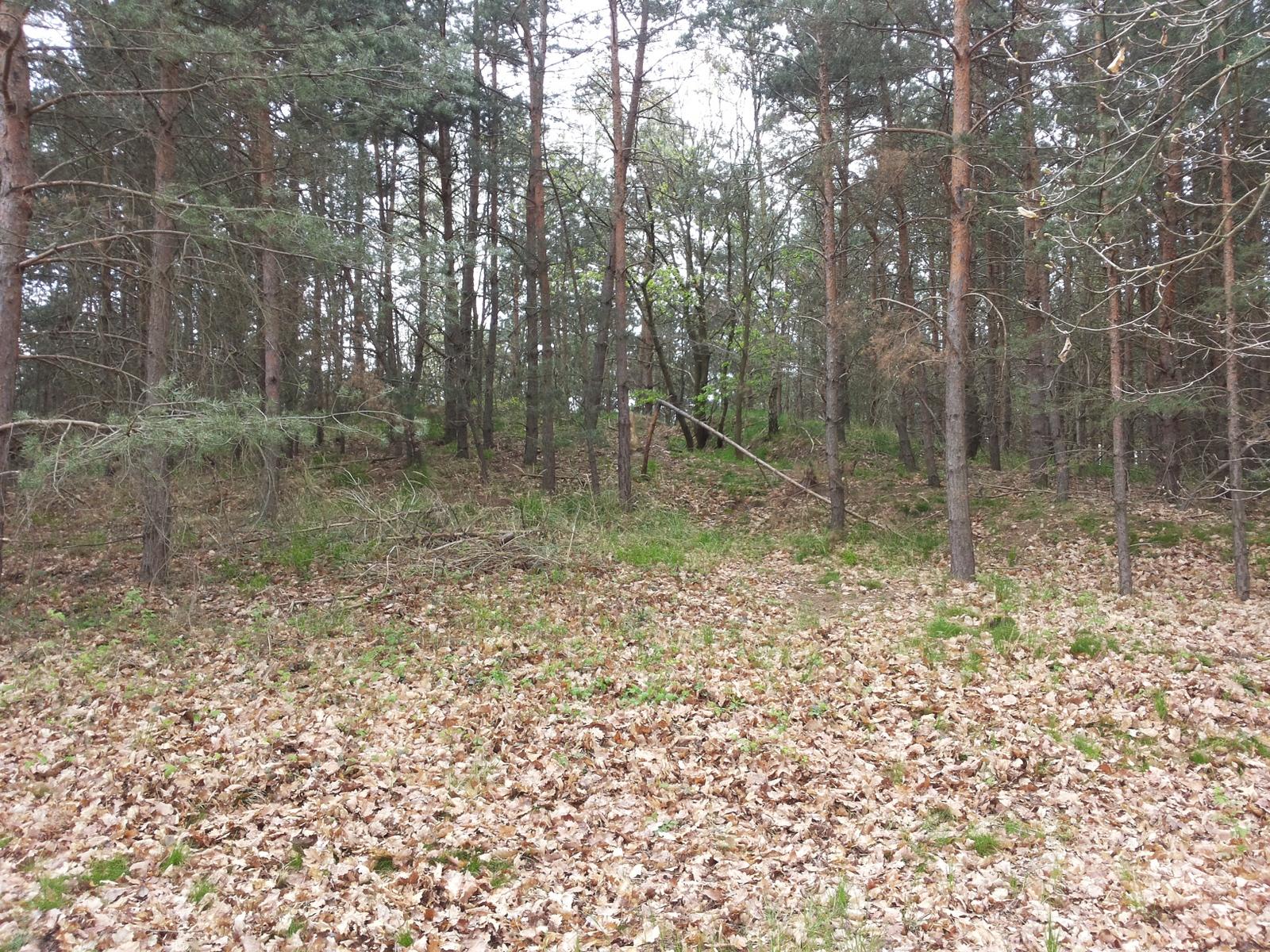 Der große Grabhügel im Wald