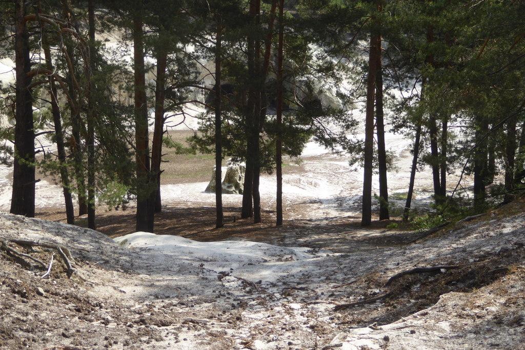 Der Sandplatz ist von Kiefern umgeben