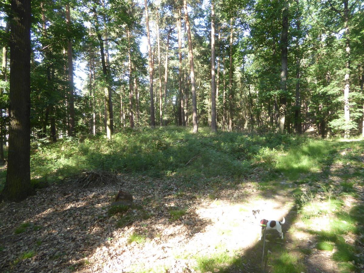 Das Hügelgrab vor dem kleinen Tyrstein