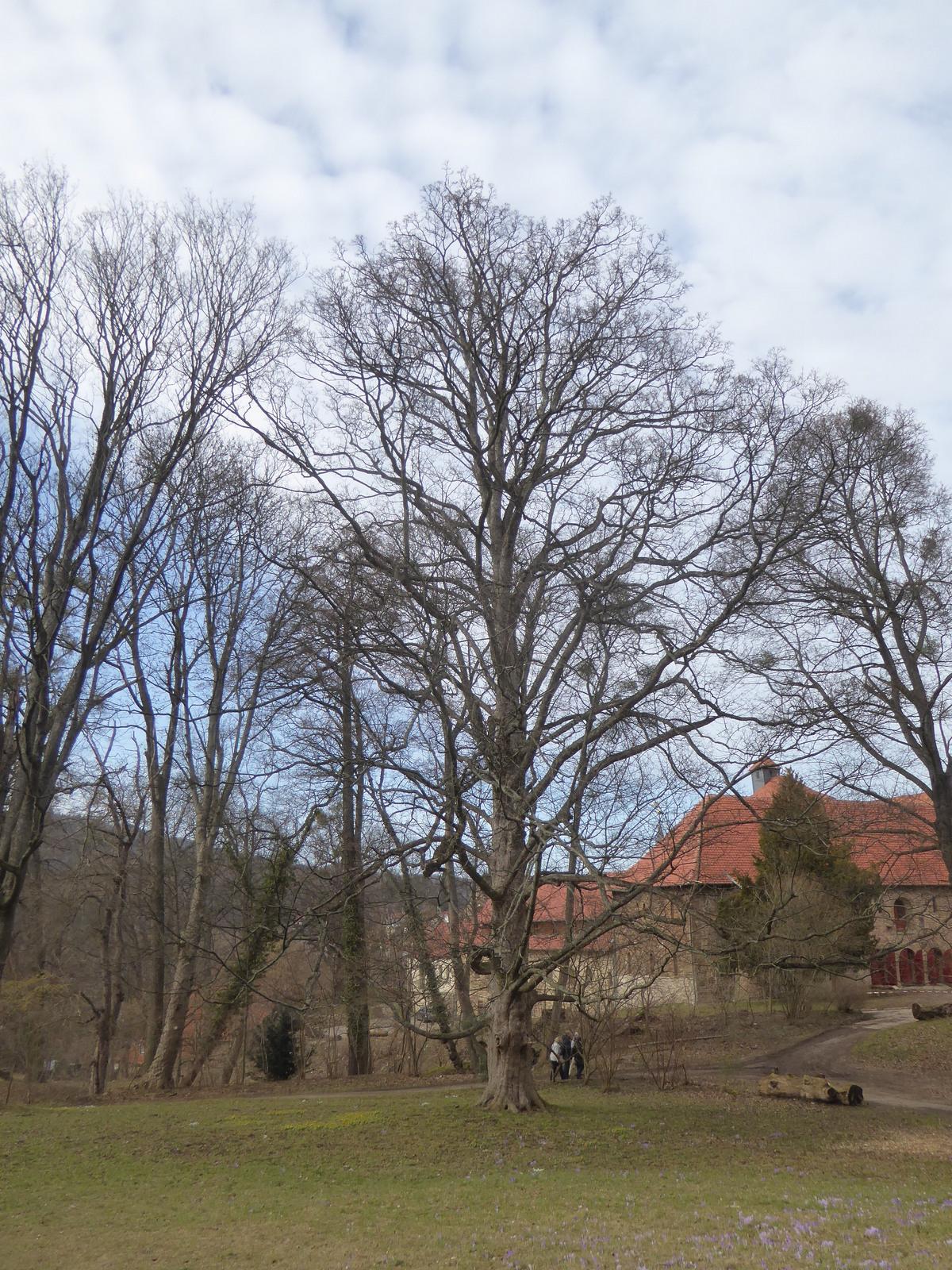 hinter dem Kloster Ilsenburg