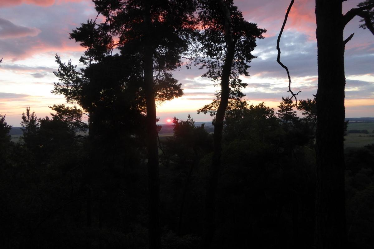Der klägliche Sonnenaufgang durch die Bäume