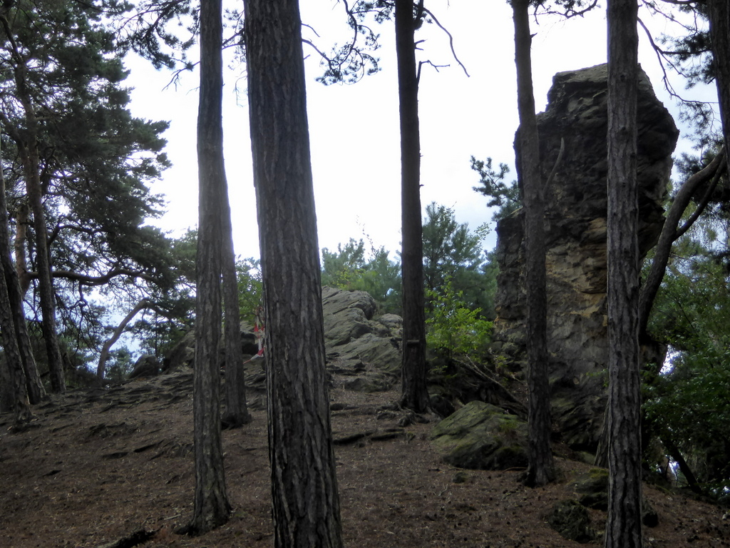 Hans Mönch im Wald