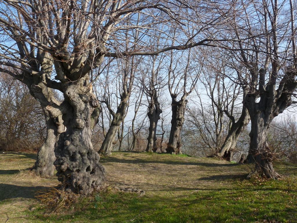 Der Baumkreis