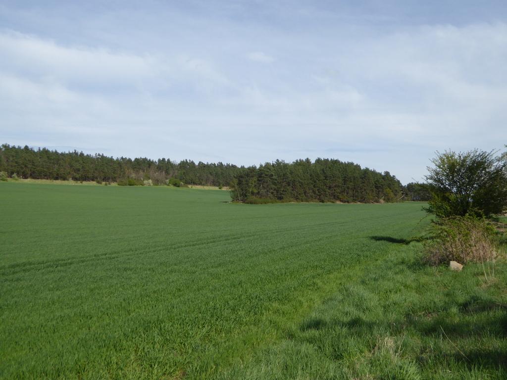 Der Scharfenberg in der Feldflur