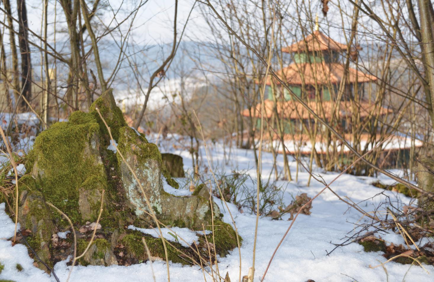 Hier, in diesem kleinen Baum-Schloss, wohnt ein Elfenvolk