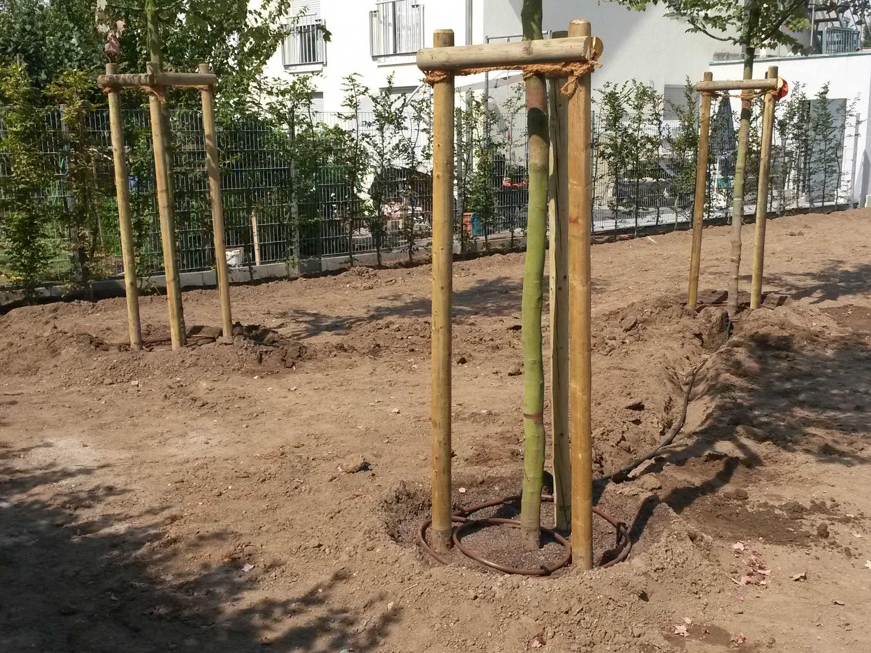 Baumpflanzung mit Verankerung