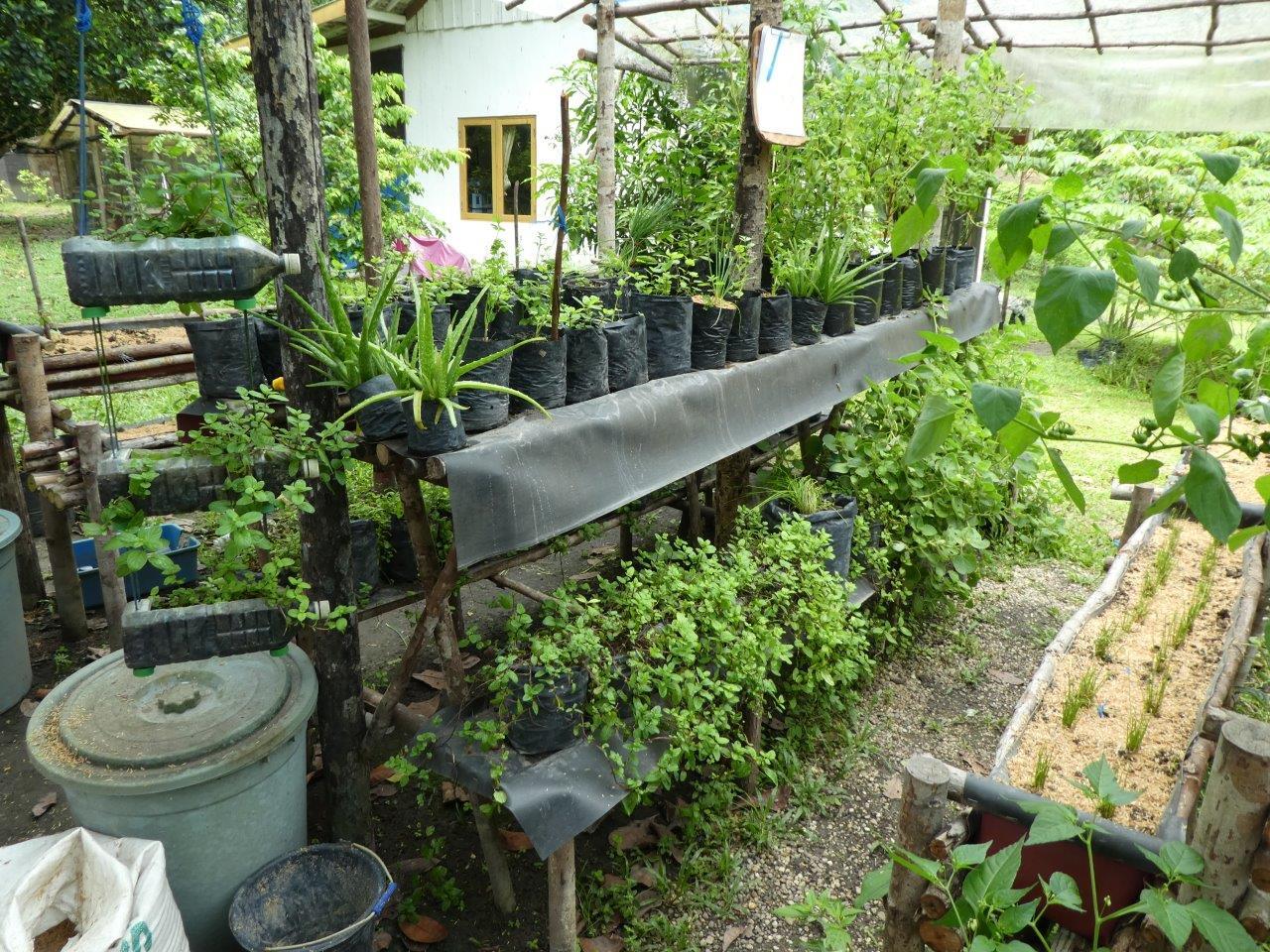 Vertikale Gärten in Kalimantan
