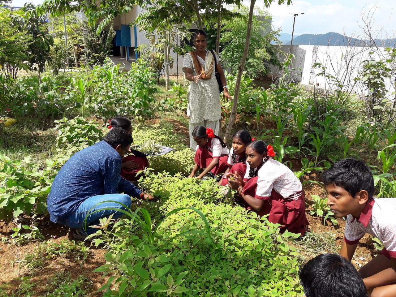 Schul-Lehrgärten in Südindien