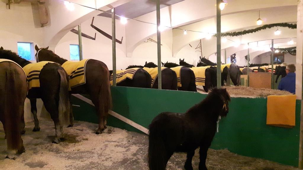 Dezember - Pferdemarkt