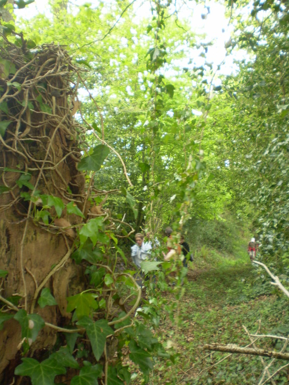 """Chemin rural n° 1 dit """"de Montpinchon à Hambye"""""""