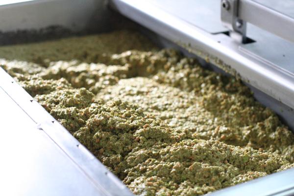 Pangaea Olivenöl aus Griechenland –in der Olivenölmühle –die Oliven werden zerkleinert und malaxiert