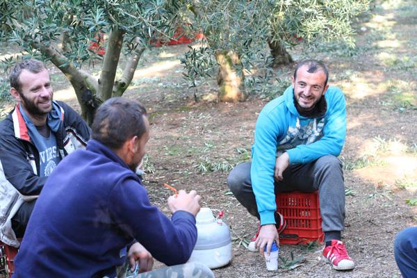 Pangaea Olivenöl aus Griechenland –traditionelle Olivenernte per Hand – Pausenzeit