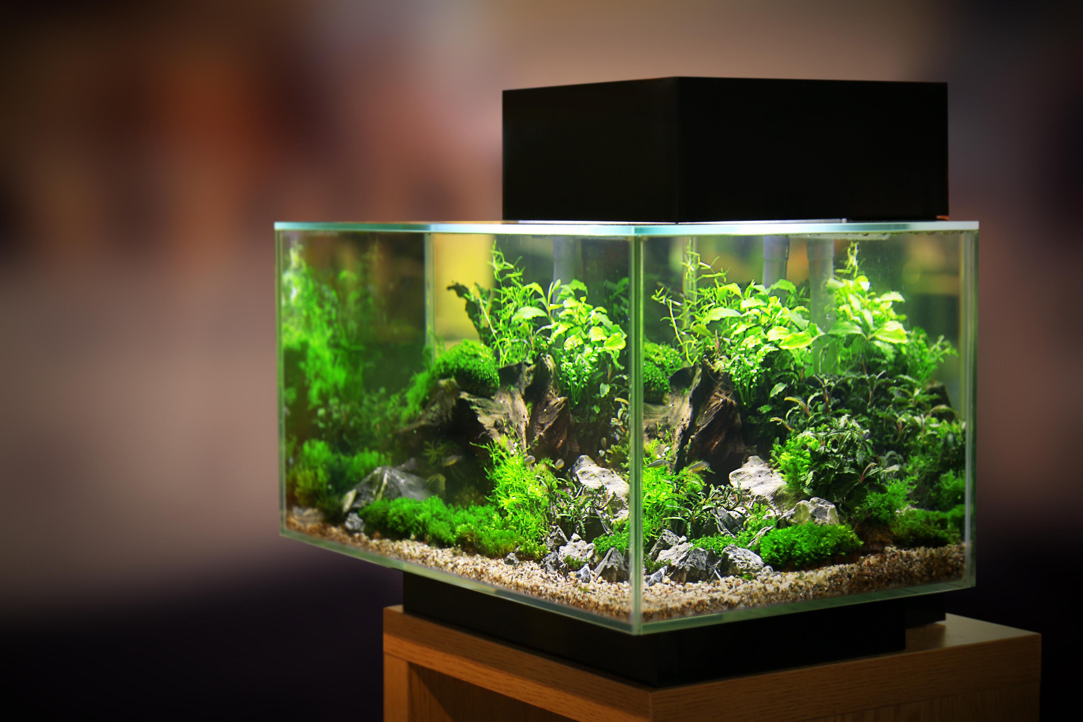 www.aquarienservice-aachen.de
