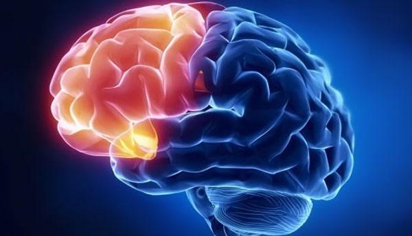 Quels liens entre notre cortex pré-frontal et la communication en faveur d'un développement désirable?