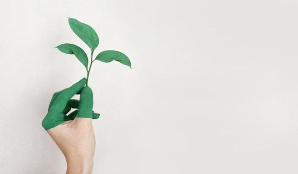 Conscience versus sensibilité environnementale