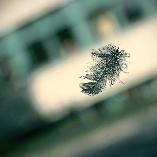 Cuando ya no somos capaces de cambiar una situación, nos encontramos ante el desafío de cambiarnos a nosotros mismos (Viktor Frankl)