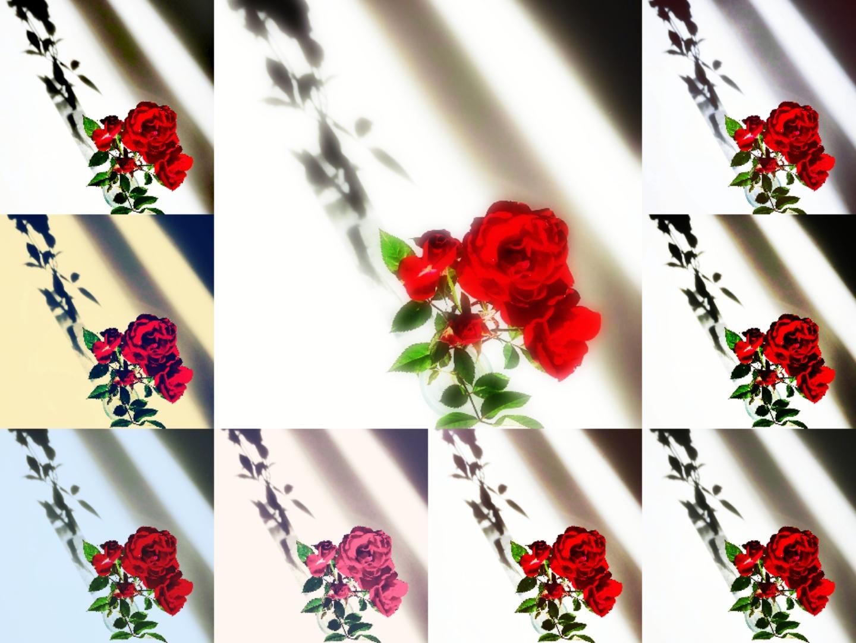 Rosen Zeit
