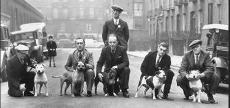 Crufts 1939