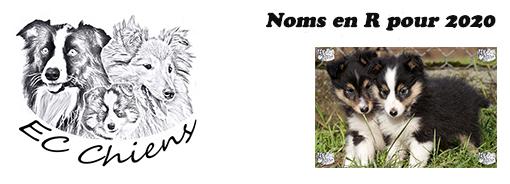 Noms en R ; idées noms de chien en r ; prénom chien en r ; lettre chien en 2020 ; appeler son chien en 2020 ; noms de chiens 2020 ; lettre pour chien 2020 ; alphabet chien ; noms de chien commençant par la lettre r en 2020