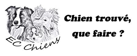 Article proposé par EC-Chiens pour savoir que faire si on trouve un chien, comment se omporter face à un chien perdu et comment retrouver les maîtres d'un chien trouvé. Rédigé par un educateur comportementaliste canin professionnel