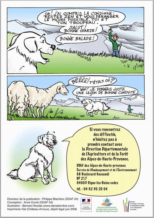 ec chiens savoir le comportement du patou avec le troupeau et le patou et les randonneurs