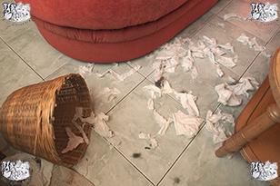 comportementaliste canin probleme comportement du chien maison problèmes educateur canin professionnel franche comte doubs territoire de belfort haute saone