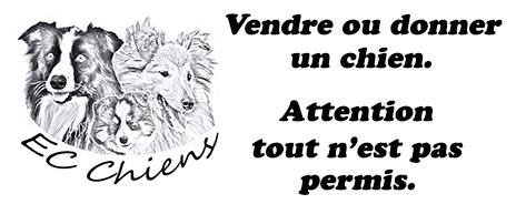 EC Chiens informe des obligations pour vendre un chien et pour donner un chien pour savoir comment donner un chien ou comment vendre un chien et précise l'obligation d'identifier le chien