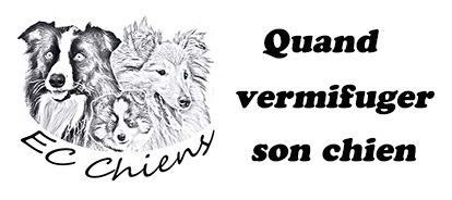 ec chiens ; quand vermifuger un chien ; quand vermifuger son chien ; quand vermifuger un chiot ; quand vermifuger son chiot ; parasites internes chien ; vermifuge chienne gestation ; vermifuge chienne en lactation ; premier vermifuge chiot