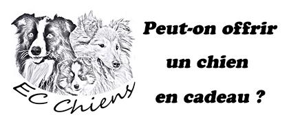 EC Chiens ; peut on offrir un chien en cadeau. Ou trouver un chien à offrir. Offrir un chien en surprise. Offrir un chien a noel ou offrir un chien à noël